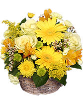 SUNNY FLOWER PATCH in a Basket in Macomb, Illinois | CANDY LANE FLORAL & GIFTS