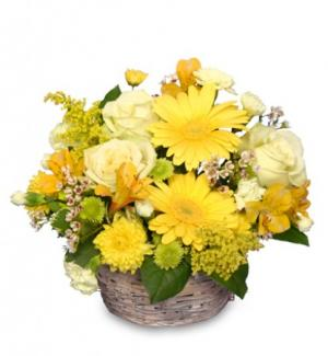 SUNNY FLOWER PATCH in a Basket in Charlotte, NC | FASHION FLOWERS GIFTS & GOURMET