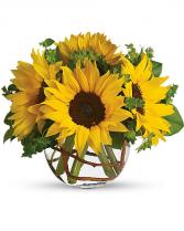 Sunny Sunflowers -T152-2C Everyday