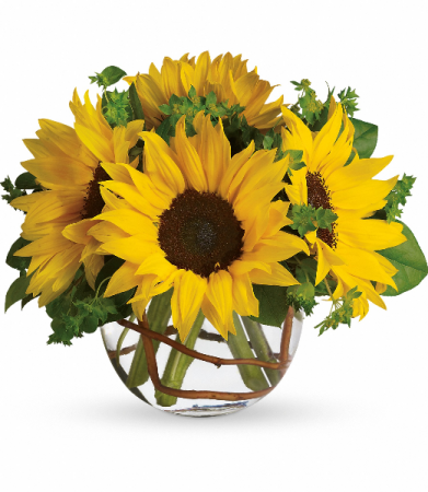 Sunny Sunflowers Fresh Arrangement