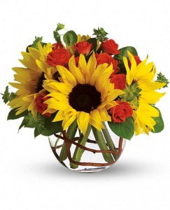 Sunny Sunflowers Fresh Arrangement in Storrs, CT | THE FLOWER POT