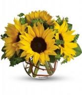 Sunny Sunflowers T152