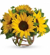 Sunny Sunflowers  Vase arrangement