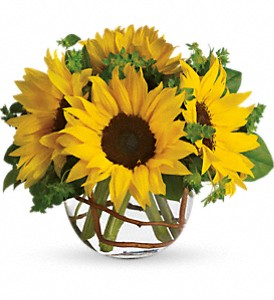 Sunny Sunny Sunflower Bowl Arrangement