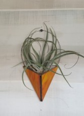 Sunset Arrow Airplanter Plant