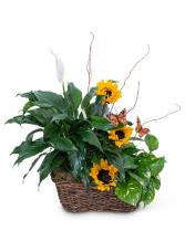 Sunshine and Butterflies Flower Arrangement