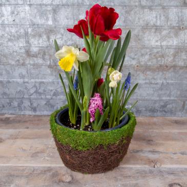 Watch It Grow Spring Bulb Garden
