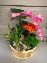 Sunshine & Joy  Dish Garden of Plants
