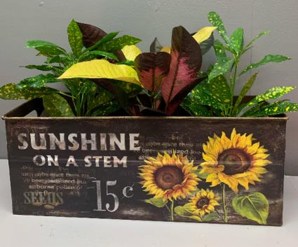 Sunshine on a Stem planter