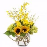 Sunshine Orchid Rays Arrangement