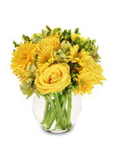 Sunshine Perfection Floral Arrangement in Conroe, Texas | THREE LADY BUGS FLORIST & MORE