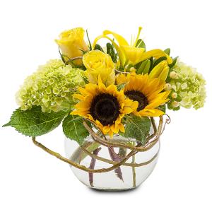 Sunshine Rays  in Prairie Grove, AR | FLOWERS-N-FRIENDS