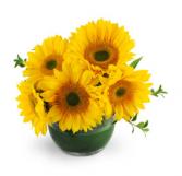 Sunshine Sunflowers