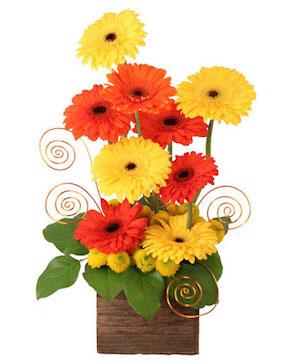 Sunup Gerberas Flower Arrangement in Ozone Park, NY | Heavenly Florist