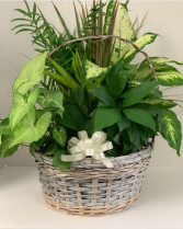 Super Planter Basket PL5 Basket Garden Green Plants
