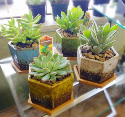 Super Trendy Succulent