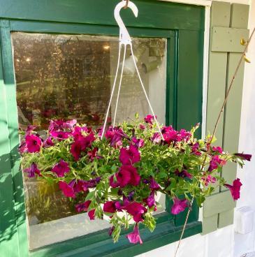 'Supertunia' Petunia Hanging Basket