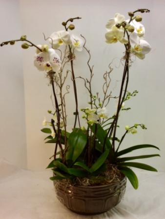 Supreme Orchid Garden