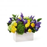 Fields of iris Floral