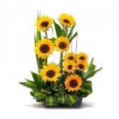 Sweet Girasol Anniversary Flowers
