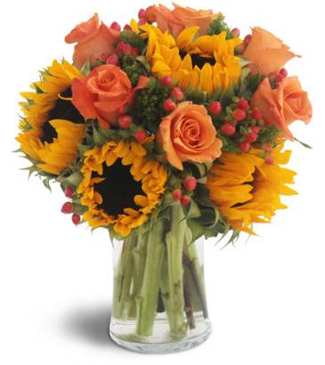 Sweet Harvest Sunflowers