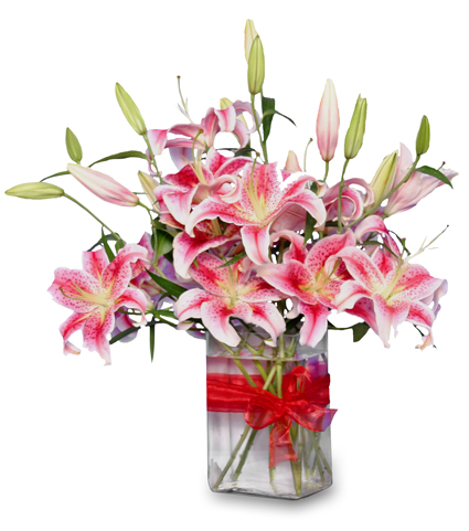 SWEET HONESTY Stargazer Lilies