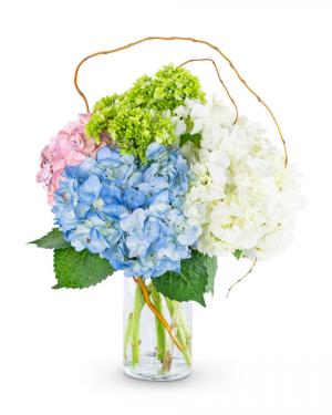 Sweet Hydrangea Flower Arrangement in Nevada, IA | Flower Bed