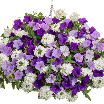 "Impressive Debut -- 12"" Hanging Basket"