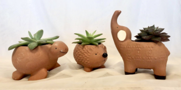 Sweet Succulent Pals