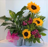 Sweet Sunny Garden of Greens Live green plant with fresh flower arrangement
