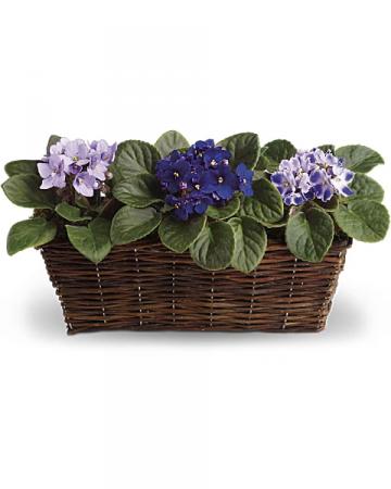 Sweet Violet Trio Basket Arrangement