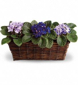 Sweet Violet Trio by Teleflora  in Valley City, OH | HILL HAVEN FLORIST & GREENHOUSE