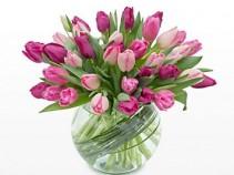 Sweetest Love Tulips Tulips