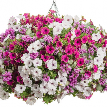 "Darlin' -- 12"" Hanging Basket"