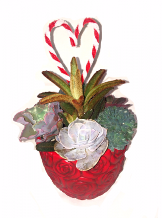 Sweetheart Succulent Love Succulent Arrangement