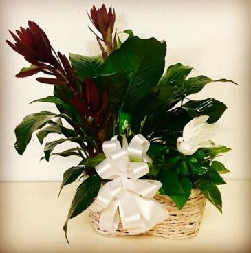 Sympathy Garden Duo Plants Designed in Basket