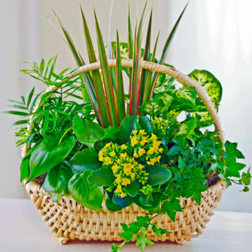 SympathyPlanter Basket