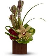 T*  Bamboo Eden  TFWEB622