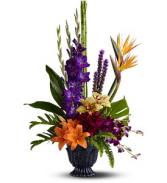 T* Paradise Blooms  TFWEB565