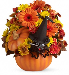 T11H100B Teleflora's Bewitched Cat Bouquet