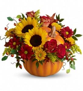 T11H110B Teleflora's Pretty Pumpkin Bouquet DX