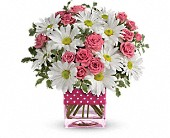 T52-3A Polka Dots & Posies Professional Admin, Baby Girl, Birthday, Get Well