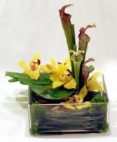 TA-2 Modern arrangement Flowers and colors may vary