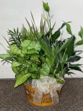 Tabletop Dishgarden Assorted Plants (local delivery only)