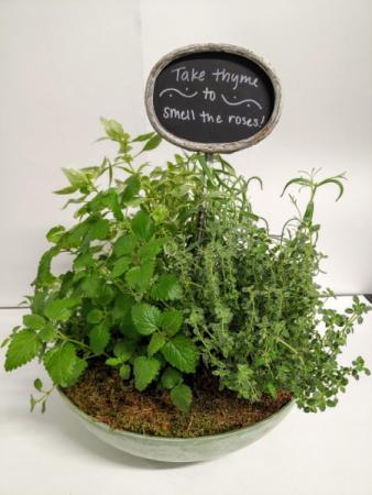Take Thyme  Herb Garden
