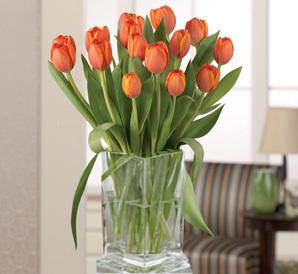 Tangerine Tulips                   vased