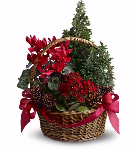 Tannenbaum Basket Blooming Plants