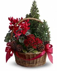 Tannenbaum Basket Live Plants