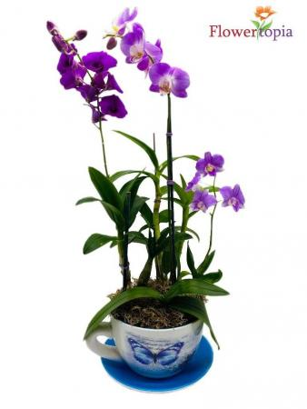 Teadorable Orchid Plant