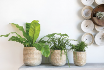 Tejida Basket planter
